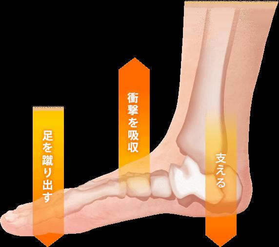 足の仕組み