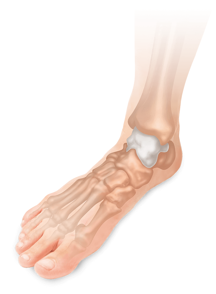 ゴリゴリ 足首 ほとんどの人が知らない正しい足首まわし。手軽にできて免疫力アップ効果も