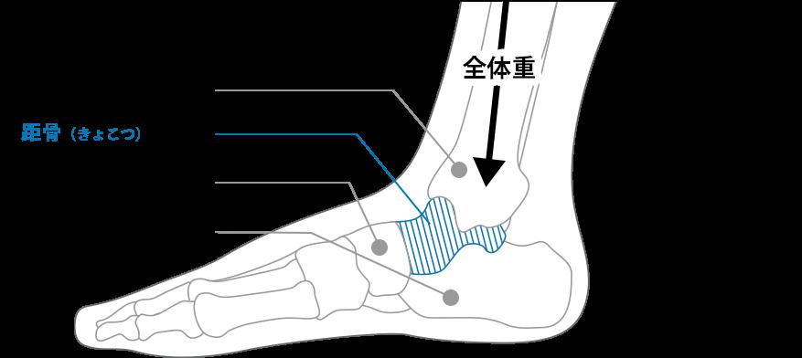 横から見た足の骨と体重の図