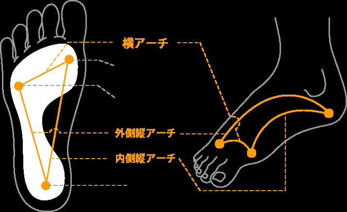 アーチと足の関係の図
