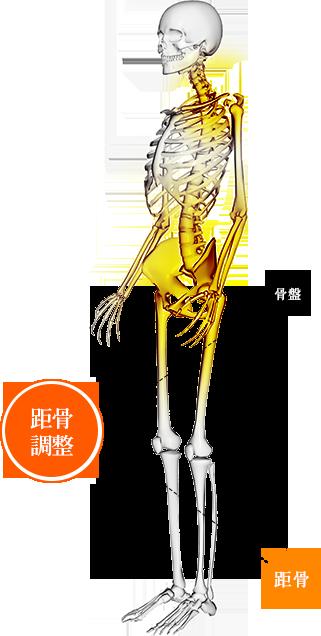 距骨調整・重心調整の図